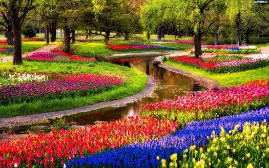 Keukenhof: Los campos de flores más espectaculares del mundo