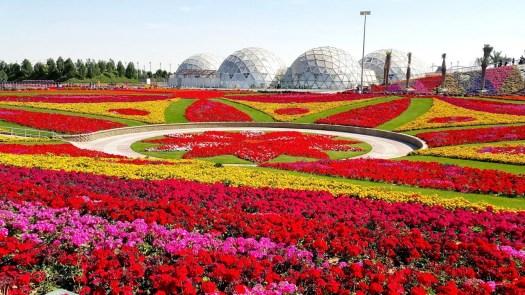 Jardín del Milagro: Top 8 campos de flores más espectaculares del mundo