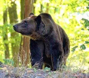 kulaqua retreat and conference center zoo brown bear images florida's best christian retreat location kulaqua