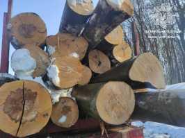 """На трасі """"Київ - Чоп"""" зупинили чотири вантажівки із деревиною"""