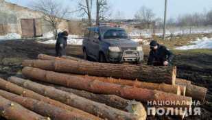 На Львівщині вилучили майже три десятки колод сосни