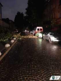 У Львові негода повалила 11 дерев