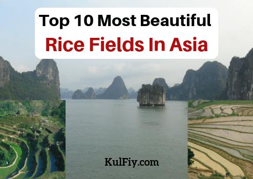 Beautiful Rice Fields In Asia