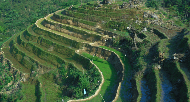 Rice Fields and Terraces of Sapa