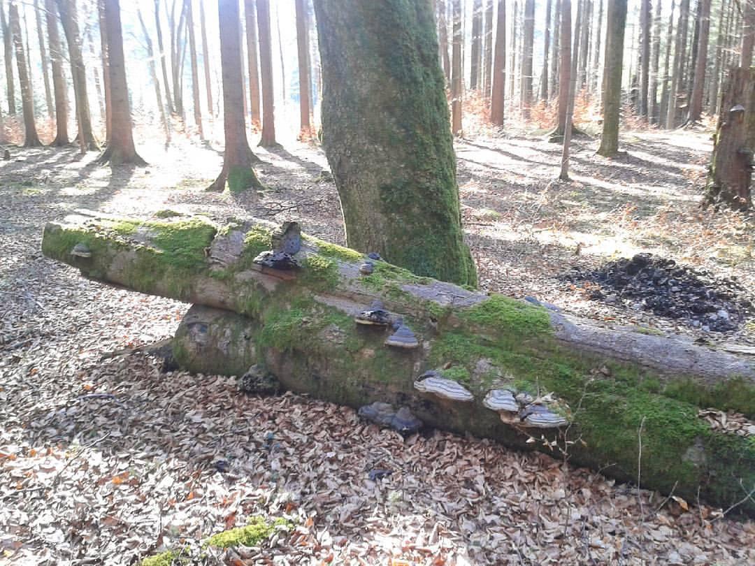 Wanderung durch den Wald bei Aying