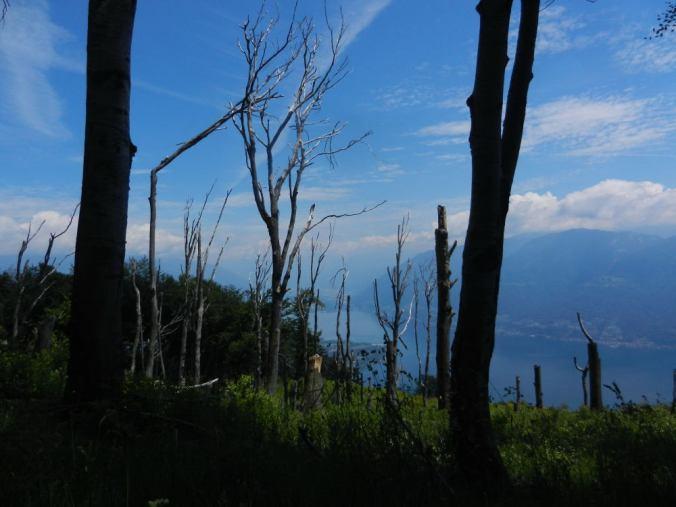 Ãœberall verkohlte Bäume:   Im April 2007 wurden hier 200 ha Wald Opfer der Flammen.