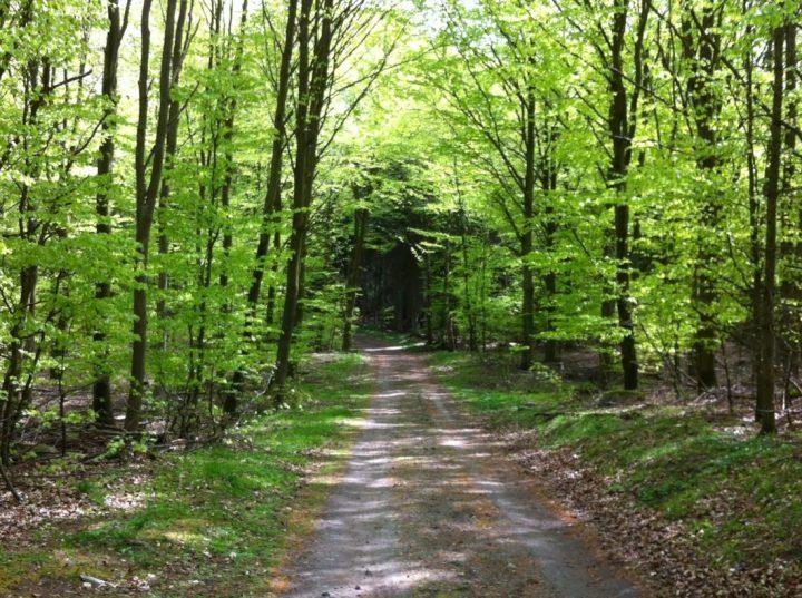 skogsväg 8