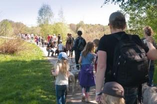 Stora Fårvandringen till Bergshamra, 17 maj 2014