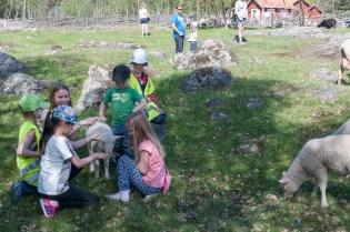 Lammets dagar på Överjärva gård, 2016