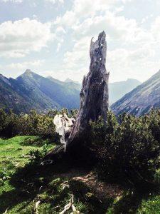 Birkental Tannheimer Berge