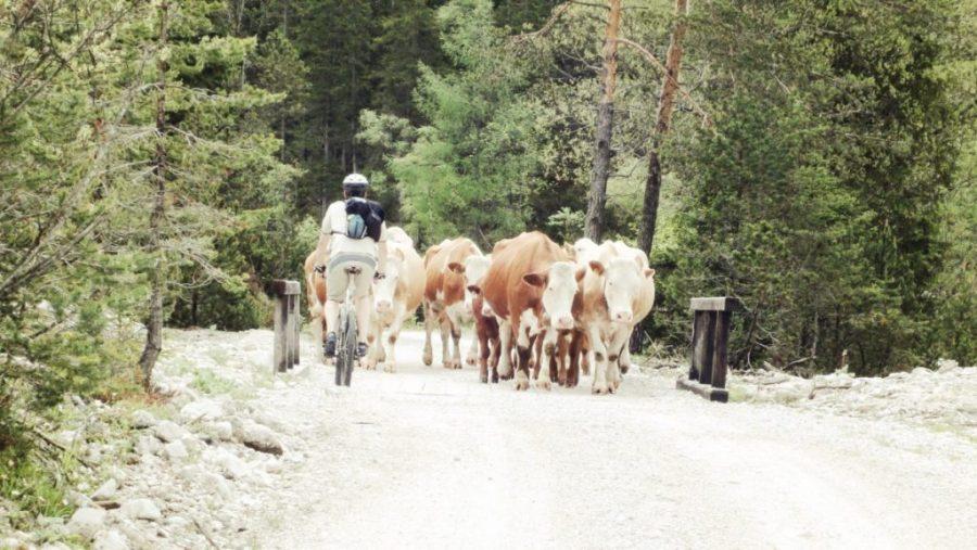Gegenverkehr auf dem Weg zu den Isarquellen