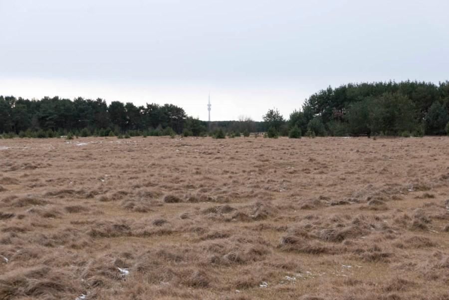 Fröttmaninger-Heide-4