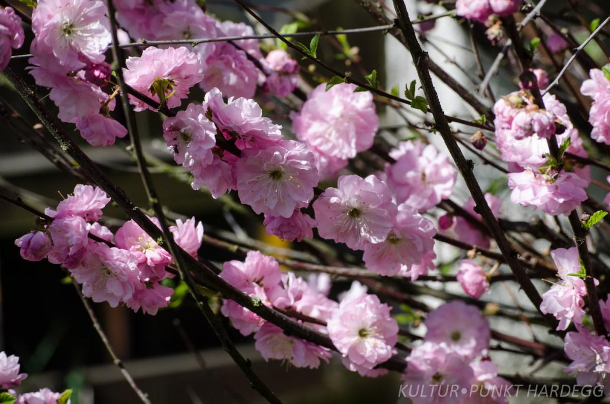 Frühling: Die Galerie in neuem Glanz