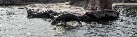 Zoom Erlebniswelt Gelsenkirchen: Alaska - mitten in der Wildnis