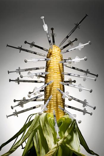 GMO-CORN-needles