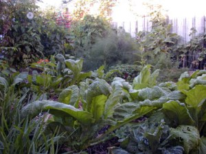 My secret Boca garden
