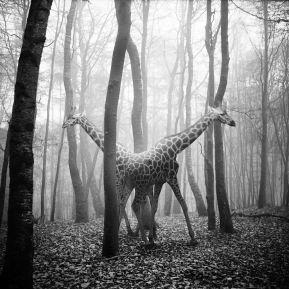 """""""Tierwald"""", Frank Machalowski, Kunst aus Leipzig"""