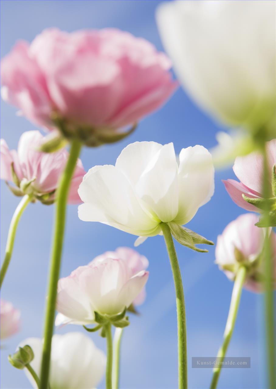 Art Painting Impressionism Olgemalde Eindruck Blumen Malerei