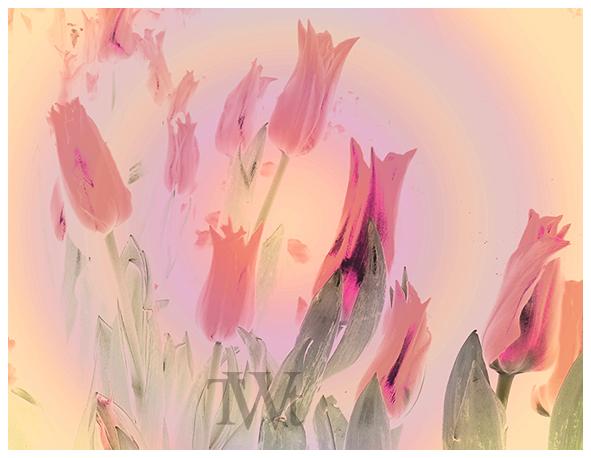 Thomas Went - Tulpen 03 (2020) DigitArt-Bild
