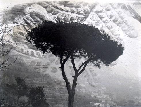 Pinje, 2005. Cibachrome fotoemulsion, 35 x 40 cm.