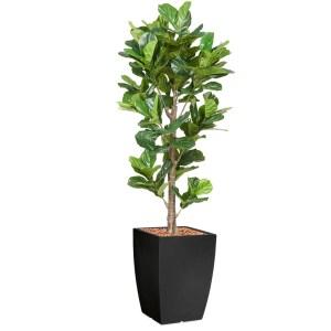 HTT - Kunstplant Ficus Lyrata in Genesis vierkant antraciet H230 cm - kunstplantshop.nl
