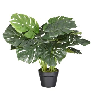 HTT Decorations - Kunstplant Monstera (60 cm) - Kunstplantshop.nl