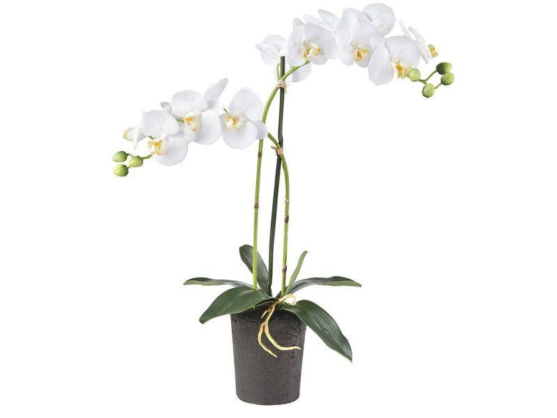 Orchidee Phalaenopsis 2-tak wit 53 cm hoog - Kunstplantshop.nl