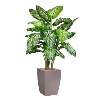 HTT - Kunstplant Dieffenbachia in Genesis vierkant taupe H150 cm - kunstplantshop.nl