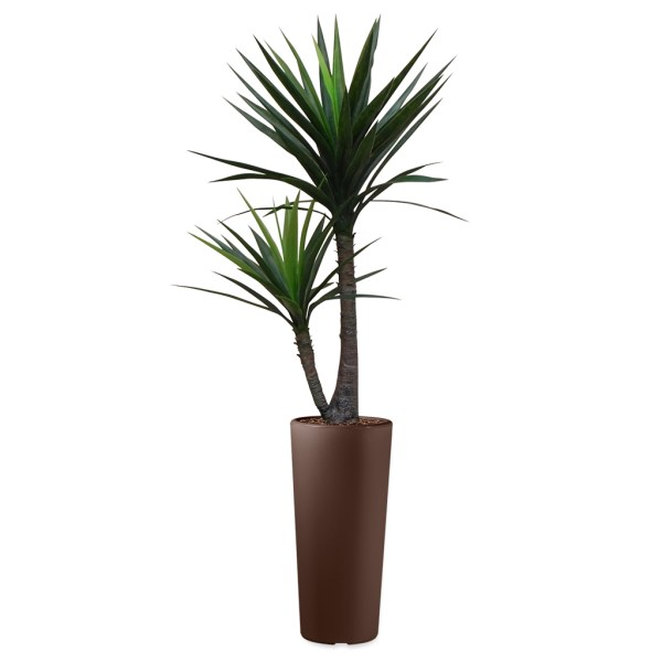 HTT - Kunstplant Yucca in Clou rond bruin H185 cm - kunstplantshop.nl