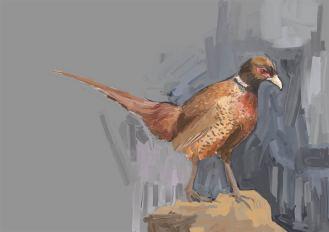 Fasan auf grauem Grund: Der Vogel in warmen Rot- und Brauntönen ergibt einen schönen Warm-kalt-Kontrast zum Hintergrund. (Beni Heyer)