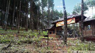 Wana Wisata Pinus Pananjung (dok. wisatabandungselatan.com)