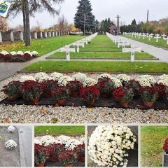 Chryzantemy ozdobiły Wieliszew i żołnierskie groby