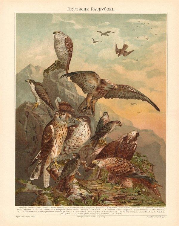 Europeiske Rovfugler