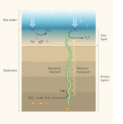 Electrifying_microbial_filaments