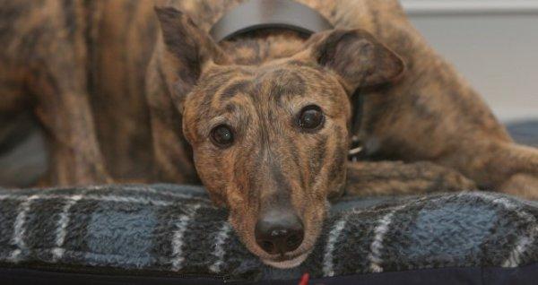 Kis odafigyeléssel észrevehetjük, ha beteg a kutya (Fotó: bluecross.org.uk)