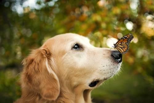 A kutya orra rendkívül érzékeny