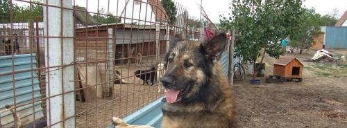 Jelenleg 320 kutya él a paksi menhelyen