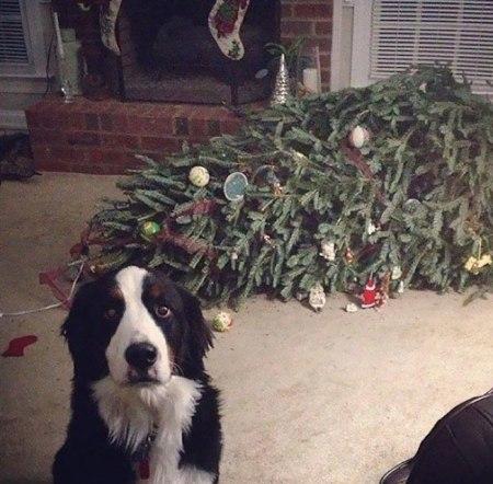 A bernipásztor és a karácsonyfa esete (earthporm.com)