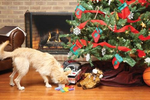 Lehetőleg ne jusson hozzá az ajándékokhoz a kutya (petsafe.net)
