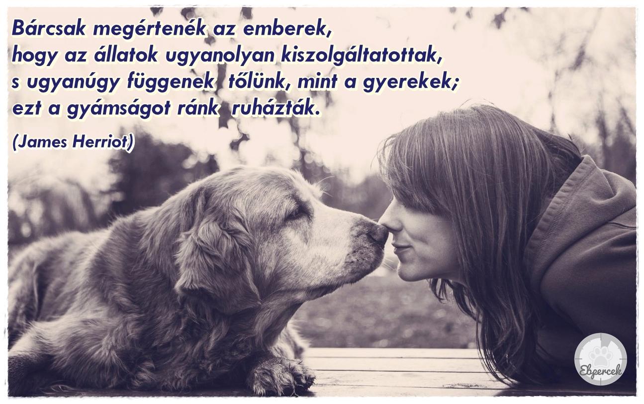 kutya ember barátság idézetek Kutyás idézetek – KutyaSzeretet.hu