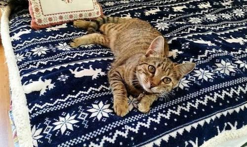 Pötyi cica is az egyesület gondozásából talált szerető otthonra