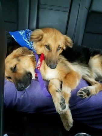 Mindig szorosan egymáshoz bújik a két kutya