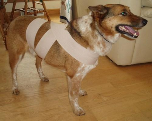 Nyugi csomó kutyád megnyugtatására (Fotó: 8statekate.net)