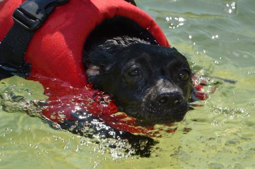 Gréti, a sérült kutya megfelelő mozgatására is odafigyelnek (Fotó: Kolák Anikó)
