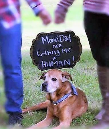 Anya és Apa megajándékoz egy kistesóval (Fotó: Facebook/FAACAC)