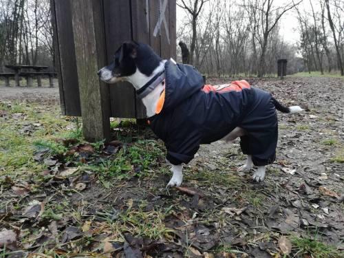 Károly kutya találta meg a tengerimalacokat az erdőben