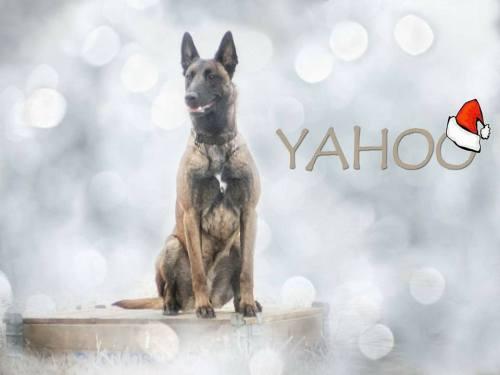 Mancs a Kézben Mentőkutyás Egyesület - Yahoo