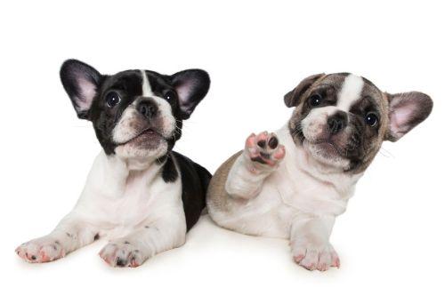 Fel a mancsokkal - fotóprojekt kutyákkal 03