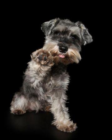 Fel a mancsokkal - fotóprojekt kutyákkal 04