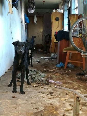 Hetekig éltek a házba bezárva a kutyák (Fotó: Tótkomlósi Állatvédő Egyesület)